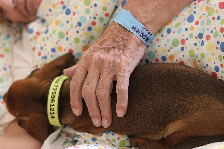 Canisterapie léčí