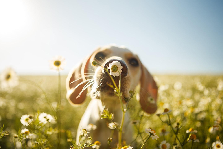 Sezónní alergie u psů a koček