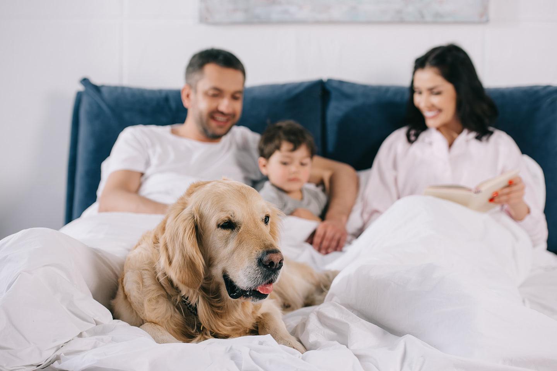 Pejsek s rodinou v posteli